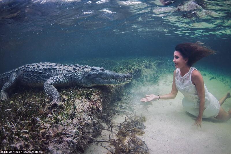 Портрет с мексиканским крокодилом