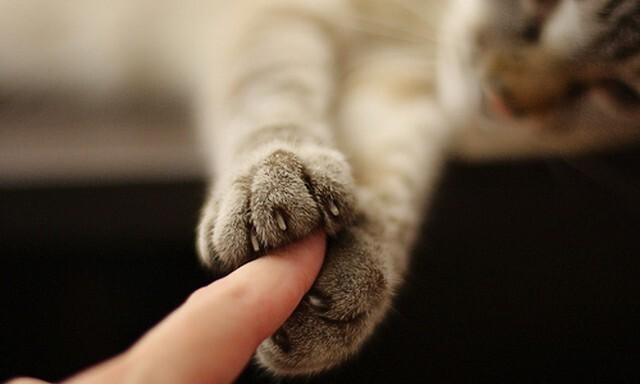 """Почему кошки так обожают """"месить тесто""""?"""