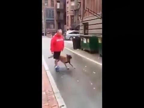 Собака-телохранитель