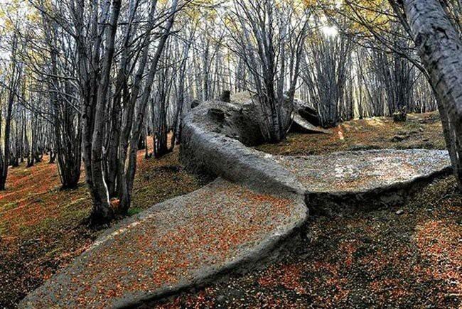 Скульптура кита в аргентинском лесу
