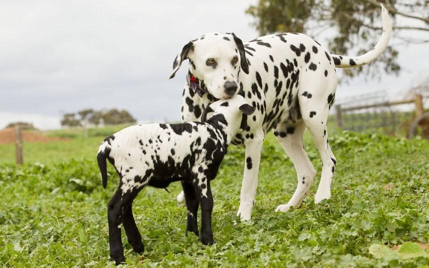 Смешная дружба животных