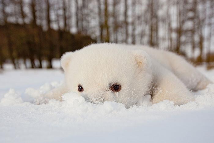 Животные, которые видят снег впервые в жизни. Эти волшебные фото подарят тебе зимнее настроение!
