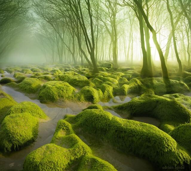 Мистические леса, которые вам захочется увидеть своими глазами