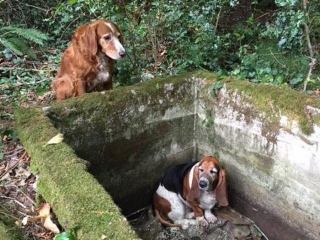Собака неделю просидела возле своего попавшего в яму друга — пока не прибыла помощь