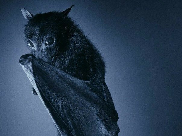 Ужас, летящий на крыльях ночи или милые детки