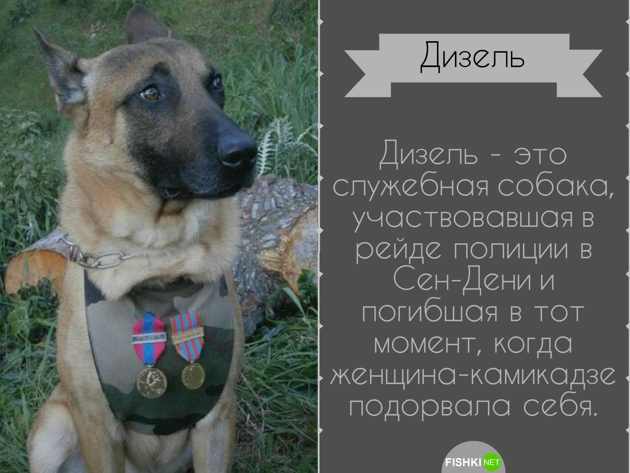 Служебный долг: собаки-герои, рискующие жизнью ради спасения человека