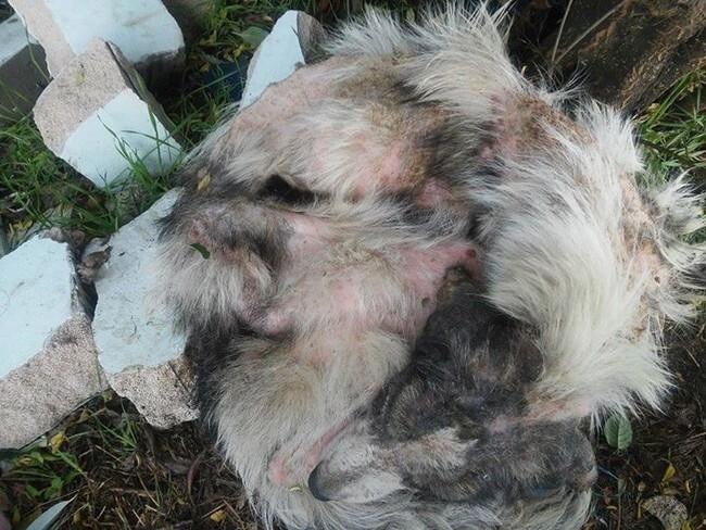 Когда ее нашли спасатели, она была на волоске от гибели