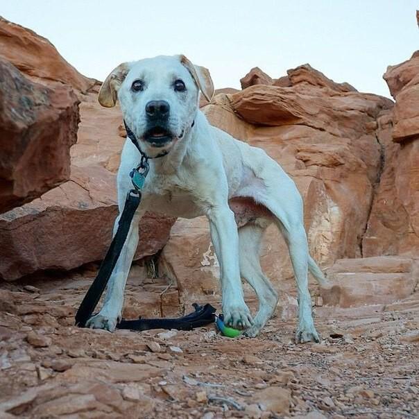 Узнав о смертельной болезни своего пса, он повез его в последнее путешествие