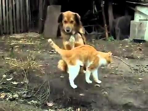 Необычная дружба кошки и собаки