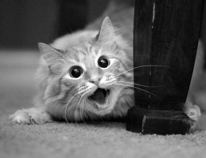 Животные в шоке