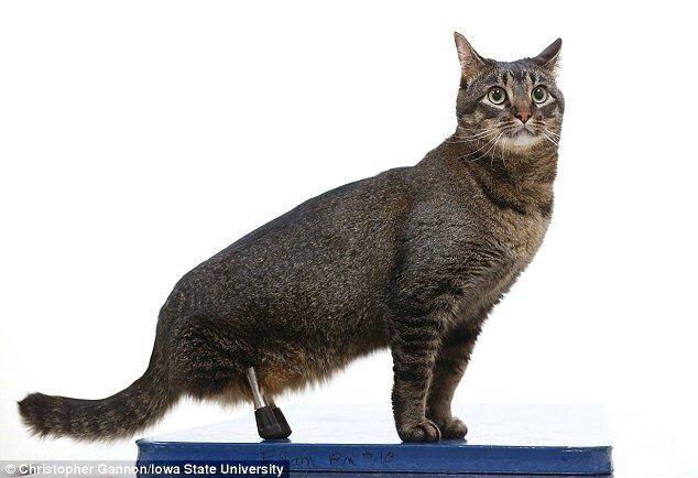Кот без задних лап получил уникальные 3D-протезы