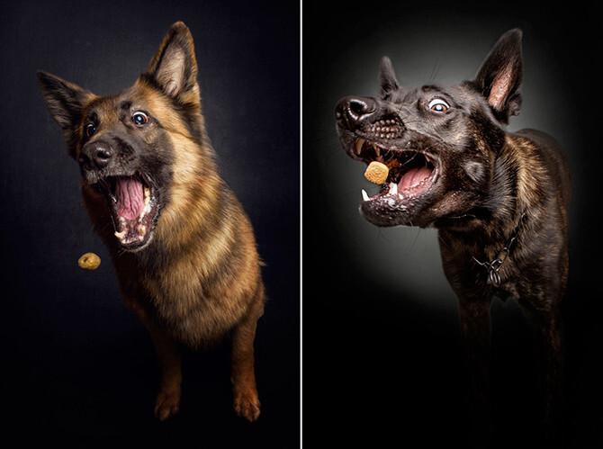 Смешные фотографии собак, пытающихся поймать угощение