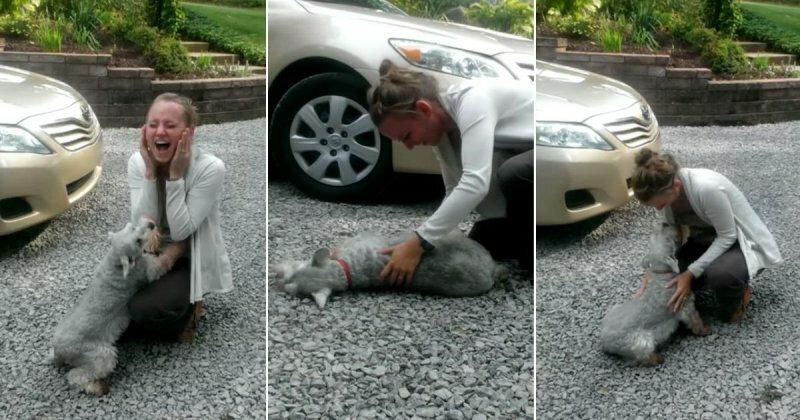 Вот оно, настоящее собачье счастье!
