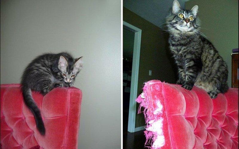 25 котят, которые так быстро выросли