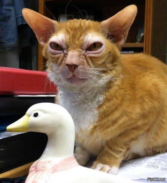 """В США обнаружен кот, который имеет много общего с внешностью персонажа """"..."""