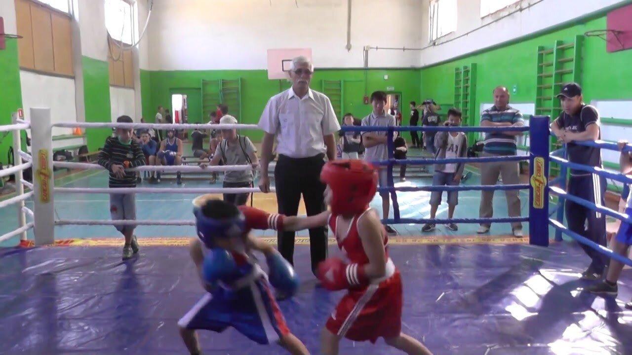 Очень классный бой маленьких боксеров