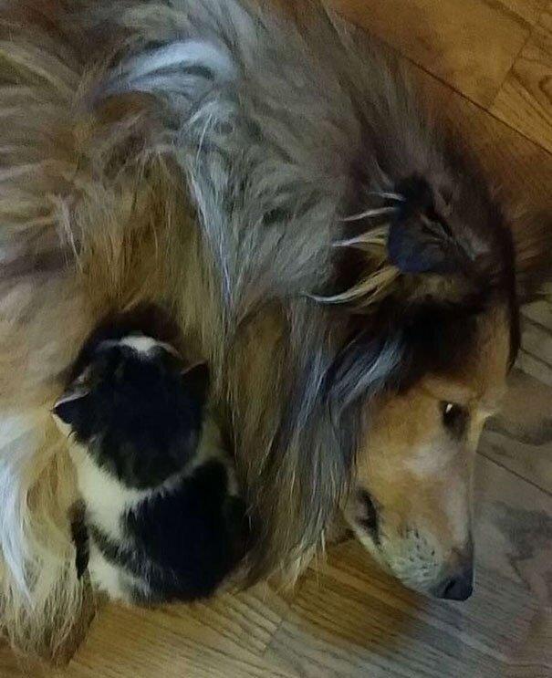 Дружба домашних питомцев