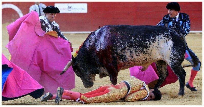 В Испании впервые за 31 год бык убил матадора