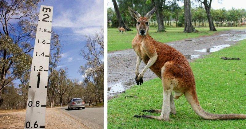 Зачем австралийцам линейки на дорогах