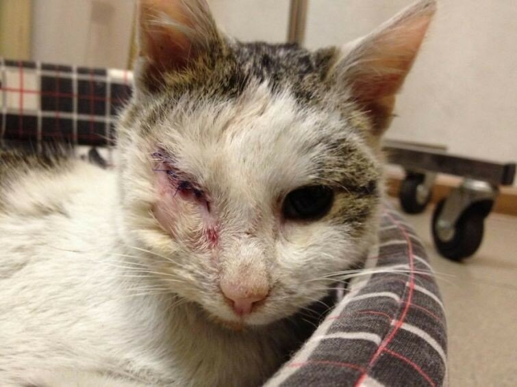 Пират – одноглазый кот, которого не только спасли от смерти, но и подарили ему новую жизнь