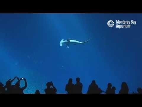Подводный мир в океанариуме Monterey 2016