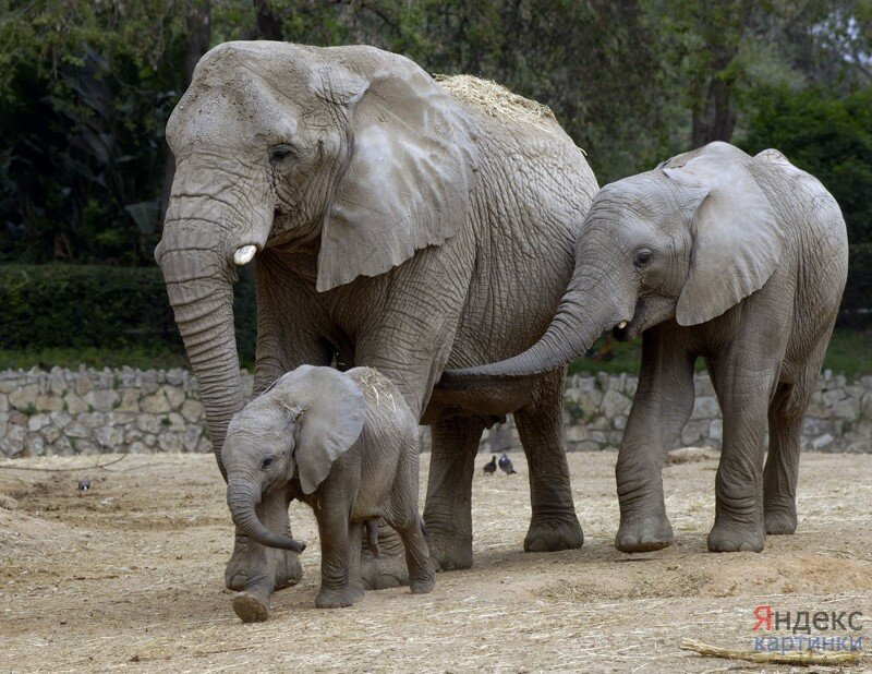 Пост слонов
