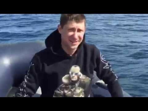 Как Дельфин испугал рыбаков в Баренцевом море