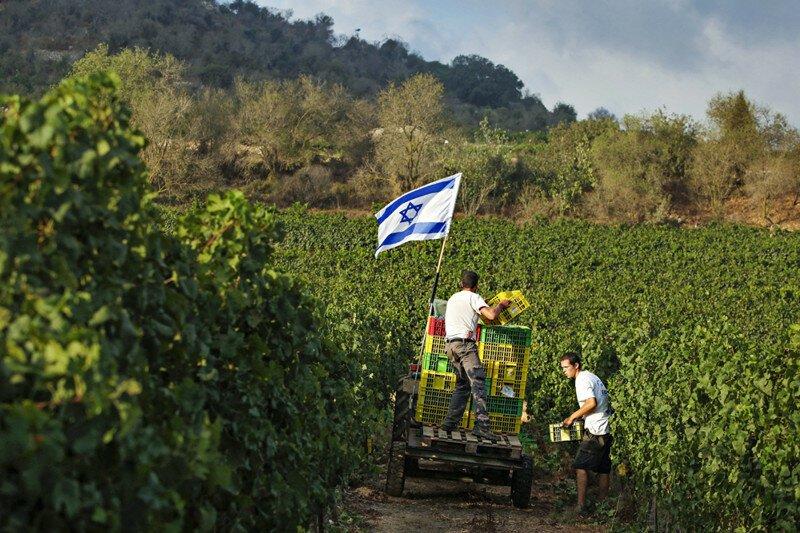 Легко ли выжить в израильских кибуцах?