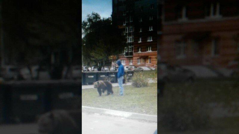 Житель Саранска выгуливал во дворе многоквартирного дома бурого медведя