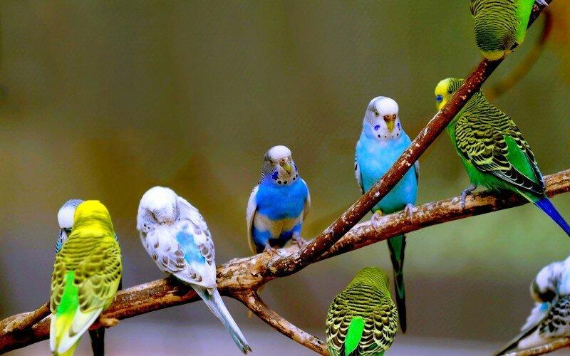 Палеонтологи нашли останки ископаемого попугая, жившего в Сибири