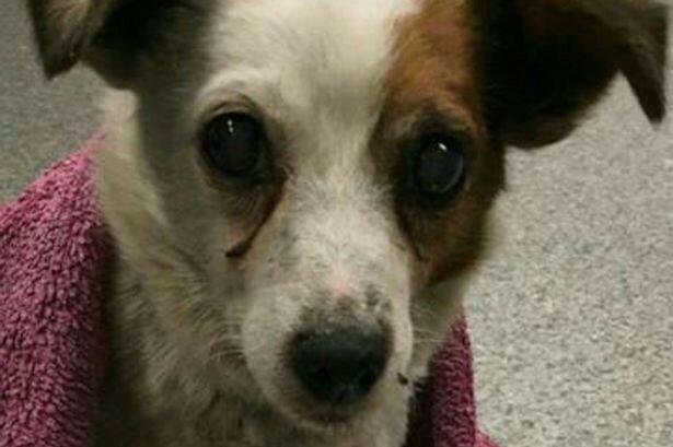 Собака вернулась к хозяевам через 5 лет после похищения!