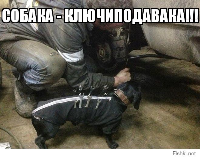 Собака - ключиподавака!!!