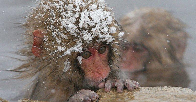 Вот на кого мы похожи, когда приходят морозы!