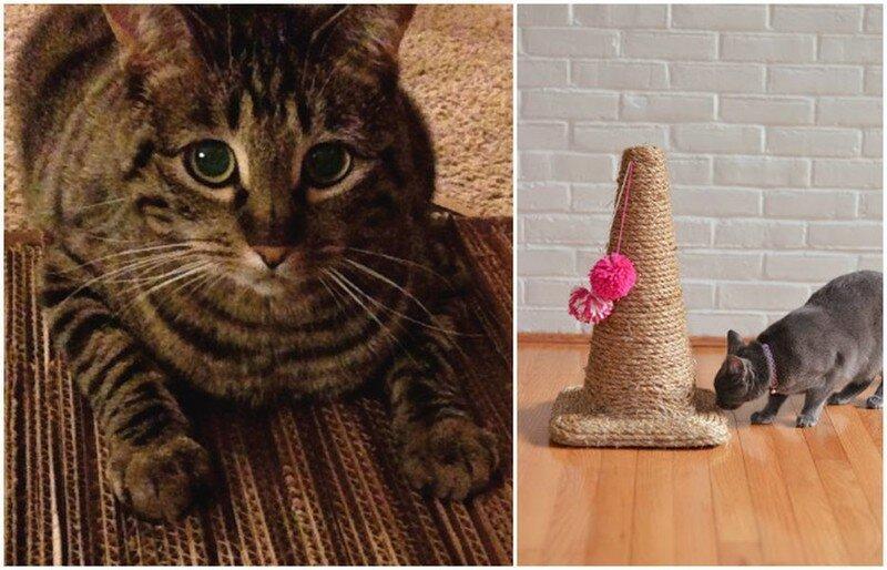 Чтобы сохранить мебель и хорошие отношения с котом