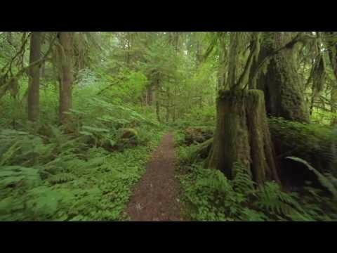 Прогулки по лесу. FUHD 4K