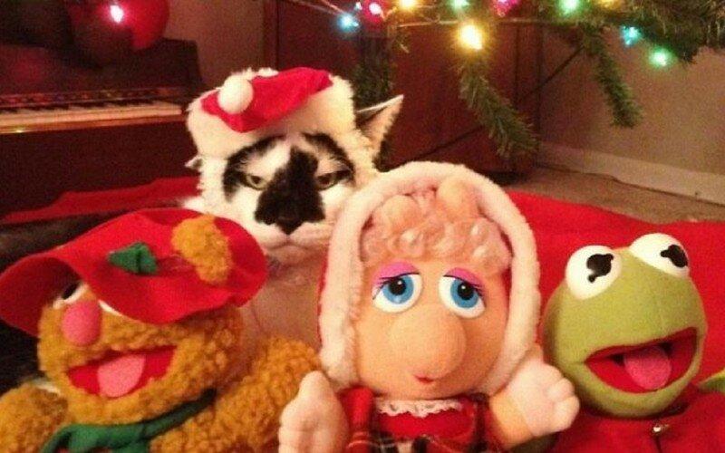 Домашние животные, которые просто ненавидят новый год!