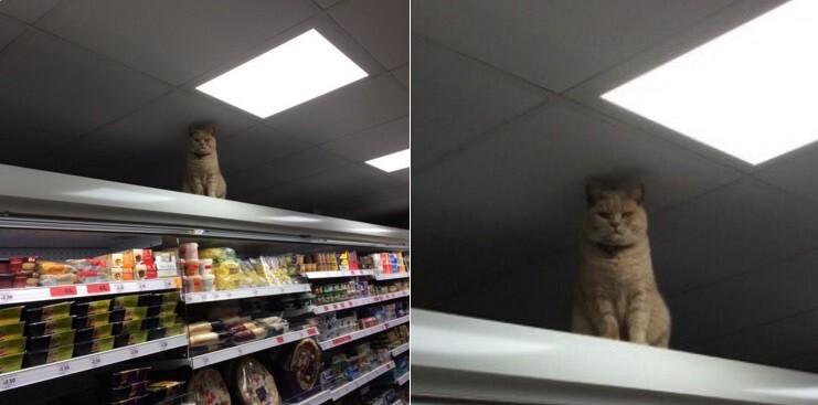 Этот кот полюбил один супермаркет в Англии и не хочет уходить оттуда