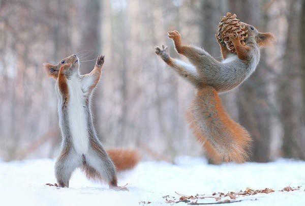 Животные не перестают нас радовать