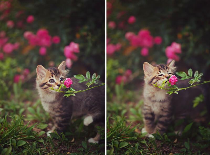 15 фотографий животных, которые любят вдыхать аромат цветов