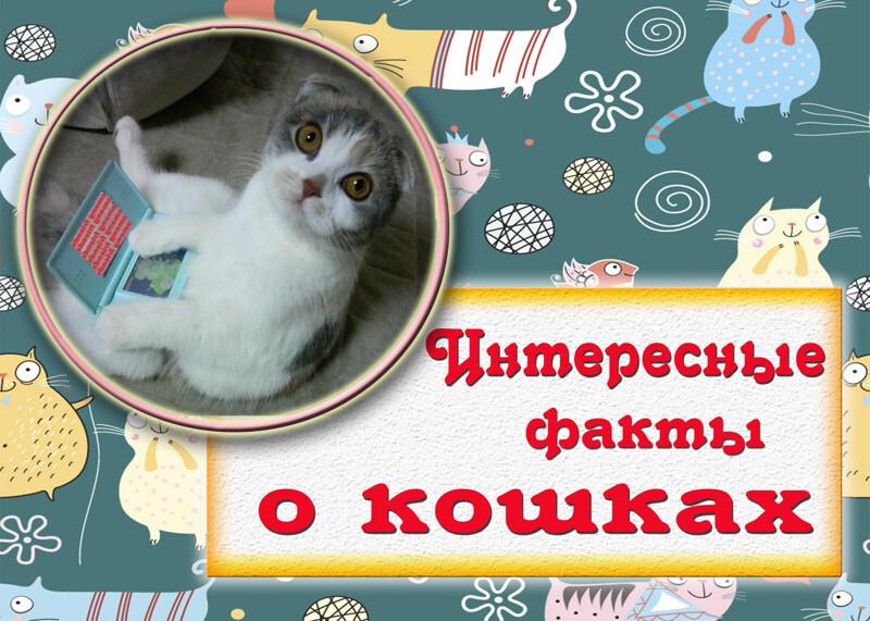 Интересные факты о кошках в открытках
