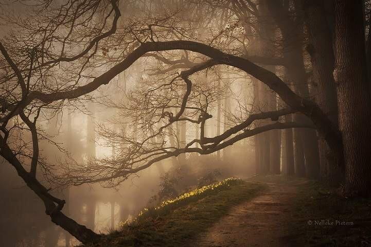 Восхитительная красота нидерландских лесов