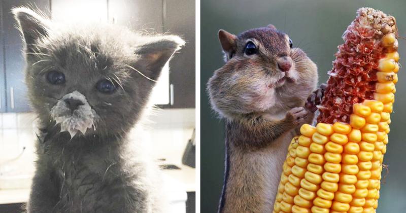 55 фотографий лакомящихся животных, которые поднимут вам настроение