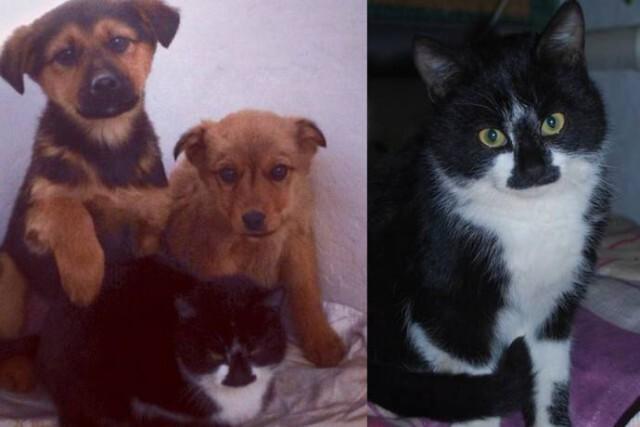 В Анапе кот кормил мышами брошенных щенков