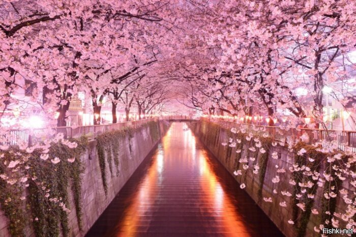 Тоннель из сакуры
