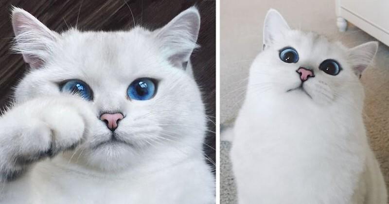 Встречайте кота с самыми красивыми в мире глазами