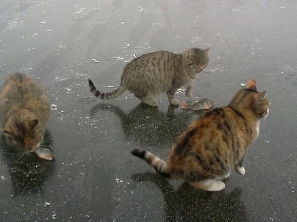 Рыбалка с котами