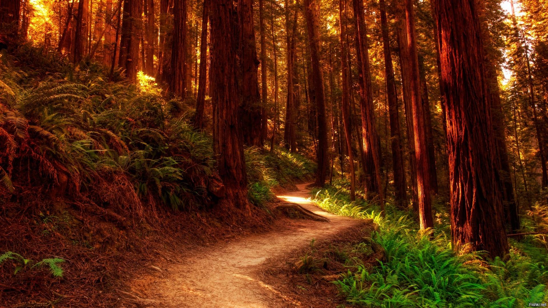 Летние прогулки по лесу: ждем, надеемся верим
