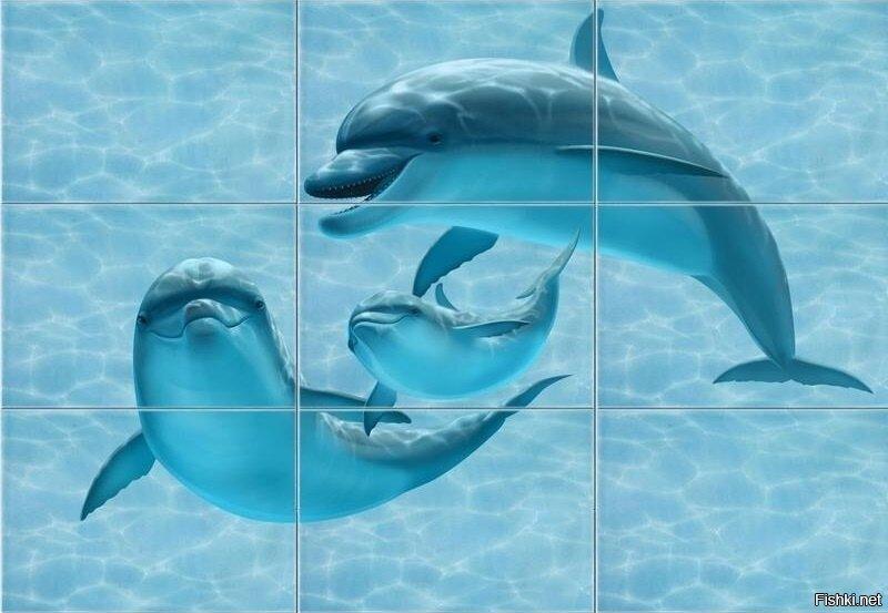 Когда не знаешь, как выглядят дельфины