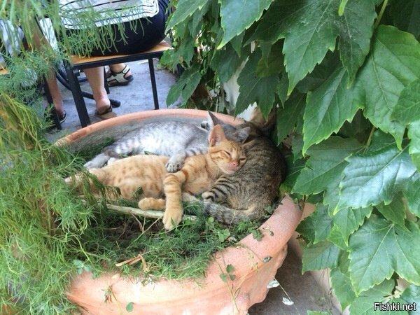 Крымские котики