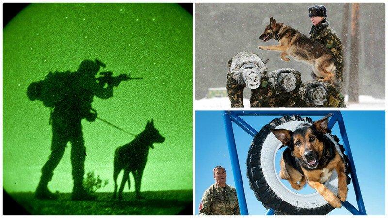 Служебные собаки: четвероногие храбрецы